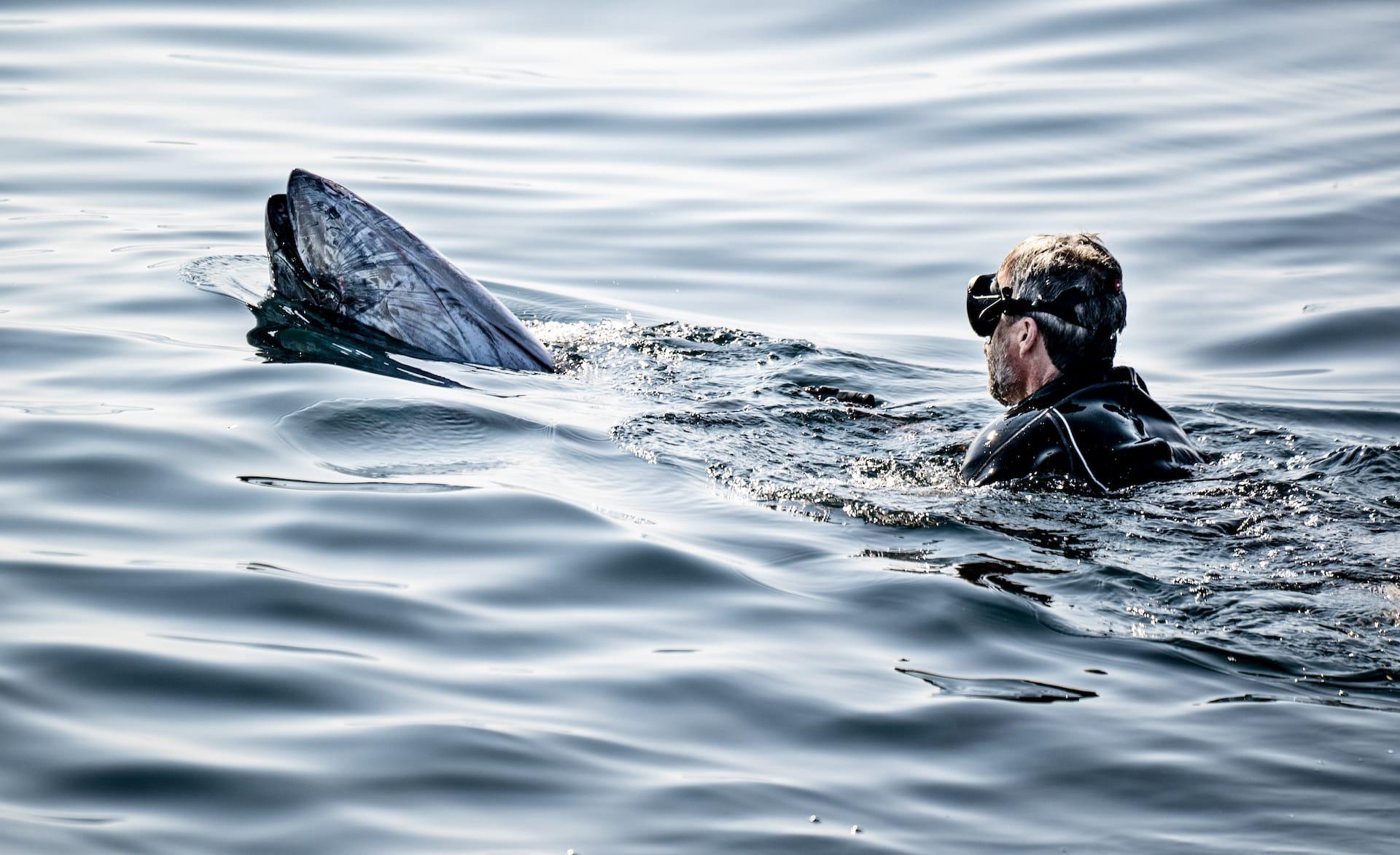 Kronprinz Frederik hilft den Thunfischen – News Royals